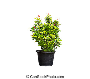 green plant and flower in flowerpot on isolated background
