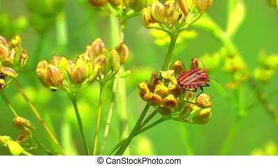 Green Plant and Flying Insect