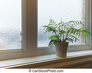 Green plant and frosted window