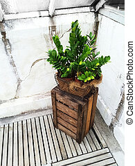 Green plant and wooden crate decorating an old greenhouse.
