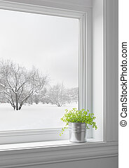 Green plant on a windowsill, with winter landscape seen through the window.