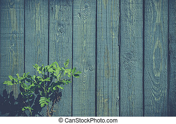 Green plant at a blue fence