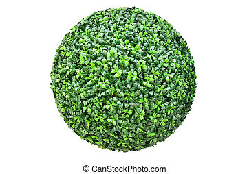 Green plant ball isolated on white background