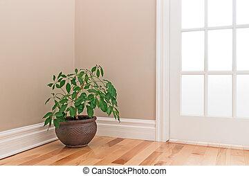Green plant decorating a room corner
