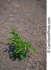 Green plant growing among the dry soil