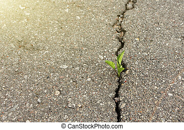 green plant growing from crack in asphalt.