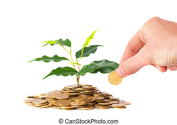 Green plant growing from the coins