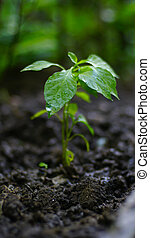 Green plant growing. nature background