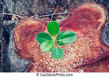 green plant growing on the bole of a tree cut off, top view