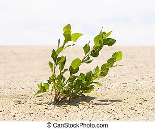 Green plant growing trough sand of the desert