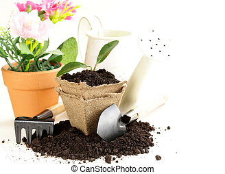 green plant grows from the ground with garden tools on a ...