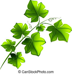 Green plant - Illustration of a green plant on a white...