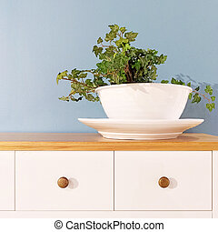 Green plant in a decorative white pot