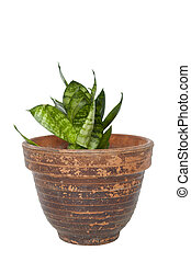 Green plant in a pot isolated on white