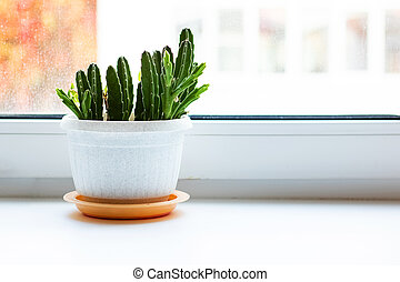 Green plant in a pot on a white windowsill