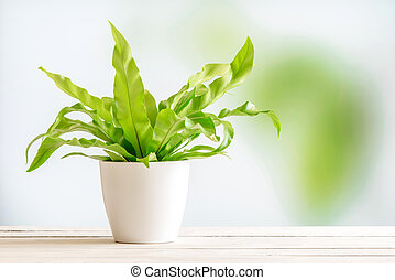 Green plant in a white flowerpot