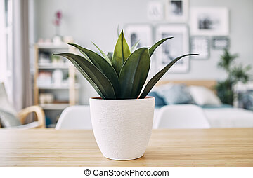 green plant in a white pot on the table. Close up