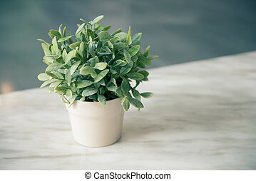 Green plant in a white pot