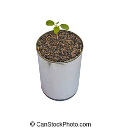 Green plant in can isolated