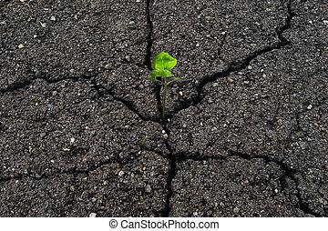 green plant in cracked asphalt