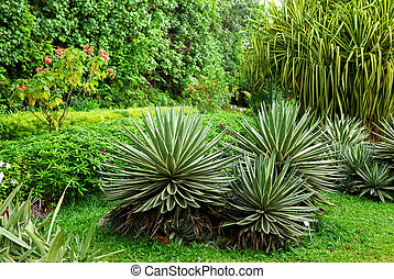 Green plant in garden