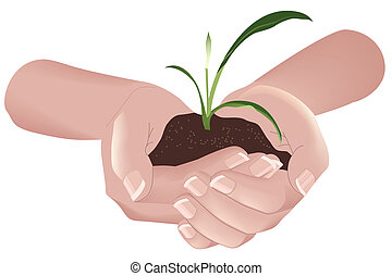 Green plant in hands. Illustration in vector format EPS