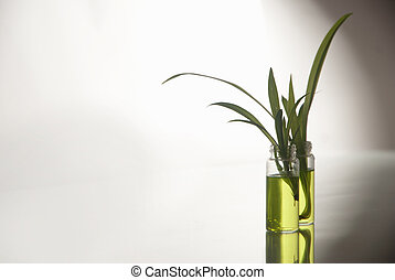 Green plant in laboratory