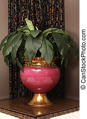 Green plant in pot at table decorating the room