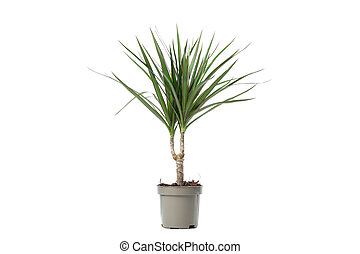 Green plant in pot isolated on white background