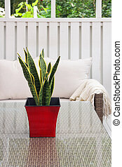 Green plant in red pot on terrace table