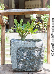 Green plant in stone pot with sunshie