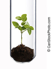 Small green plant in a test tube as a symbol of green biotechnology.
