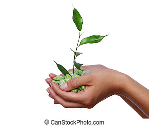 green plant in the hands