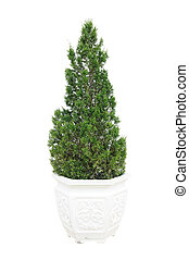 Green plant in white pot on white background