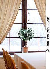 Green plant in window