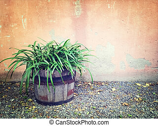 Green plant in wooden pot near an old wall