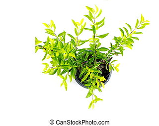 green plant isolated collection on white background