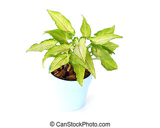 green plant isolated on a white background