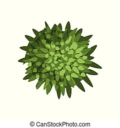 Green plant, landscape design element, top view vector Illustration on a white background