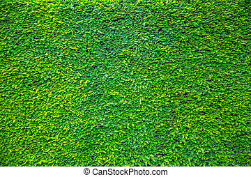 Green plant Leaves on wall