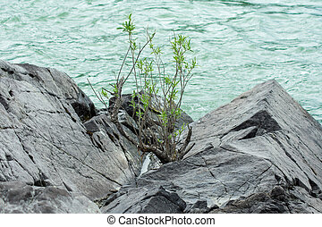 green plant on a rock by the river