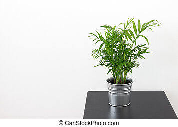 Green plant on a wooden table