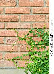 Green plant on brick wall