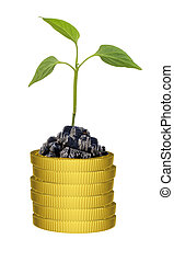 Green plant on coins stack