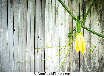 green plant on old bamboo background with space for your text