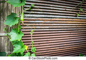 green plant on rusty zinc wall with space for your text