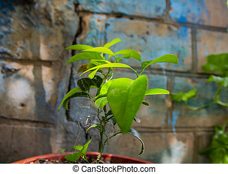 Green plant on the background of a cracked wall.