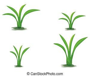 green plant on white background vector design