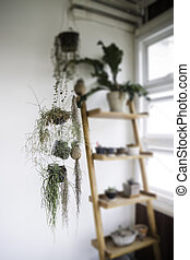 Green plant pot on the shelf
