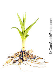 green plant root details